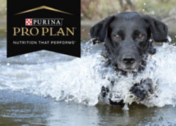 Black dog running through the water with the Purina logo