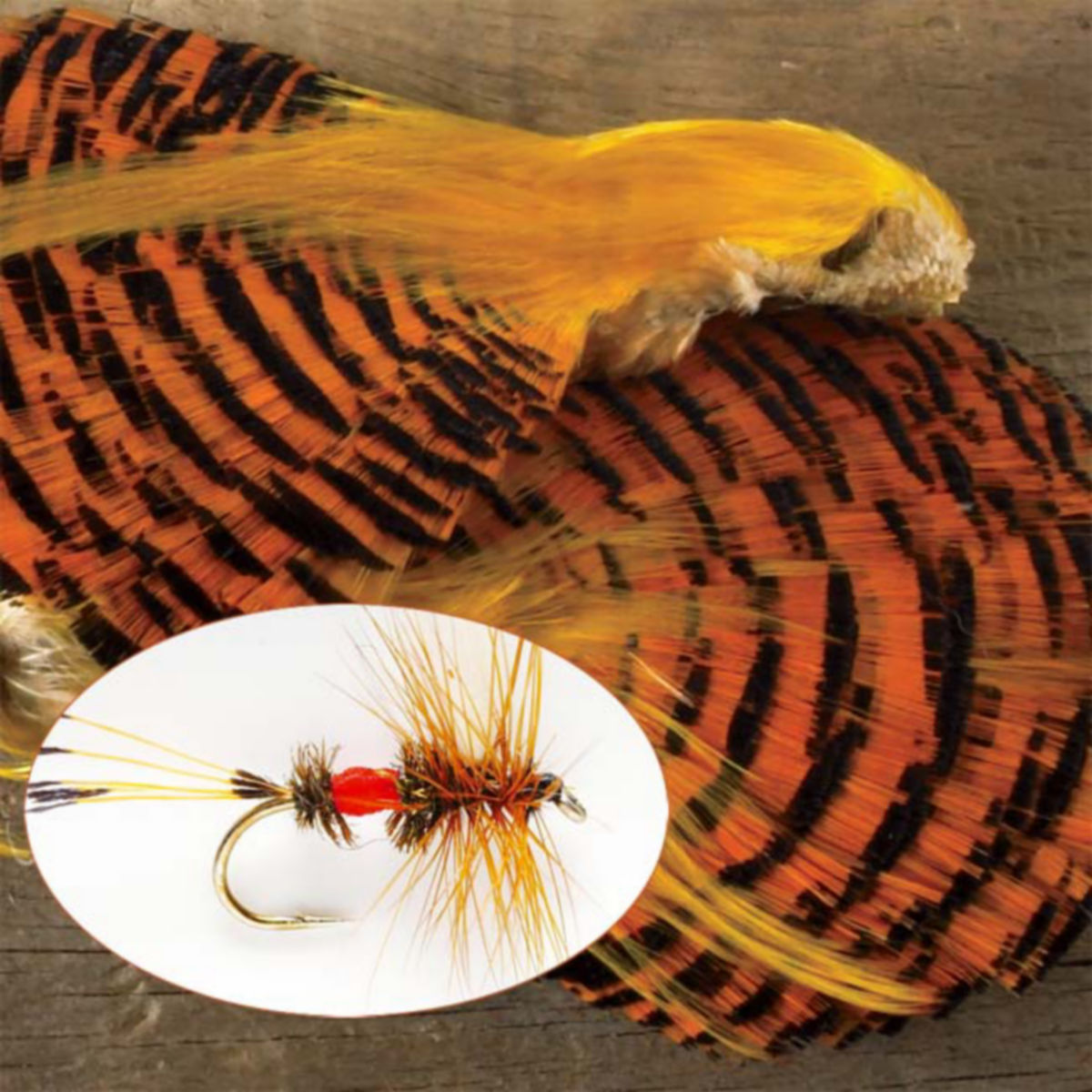 Golden Pheasant - image number 0