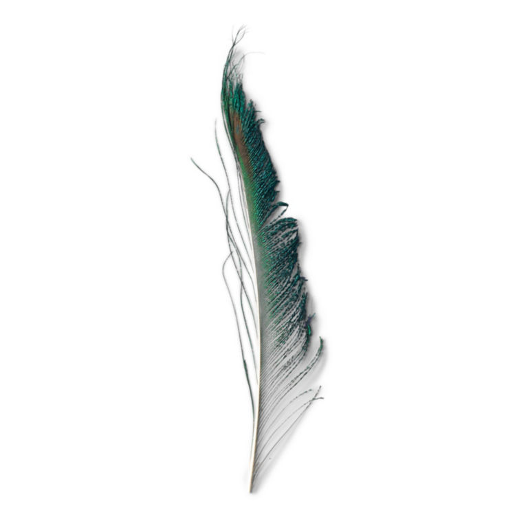 Peacock -  image number 0
