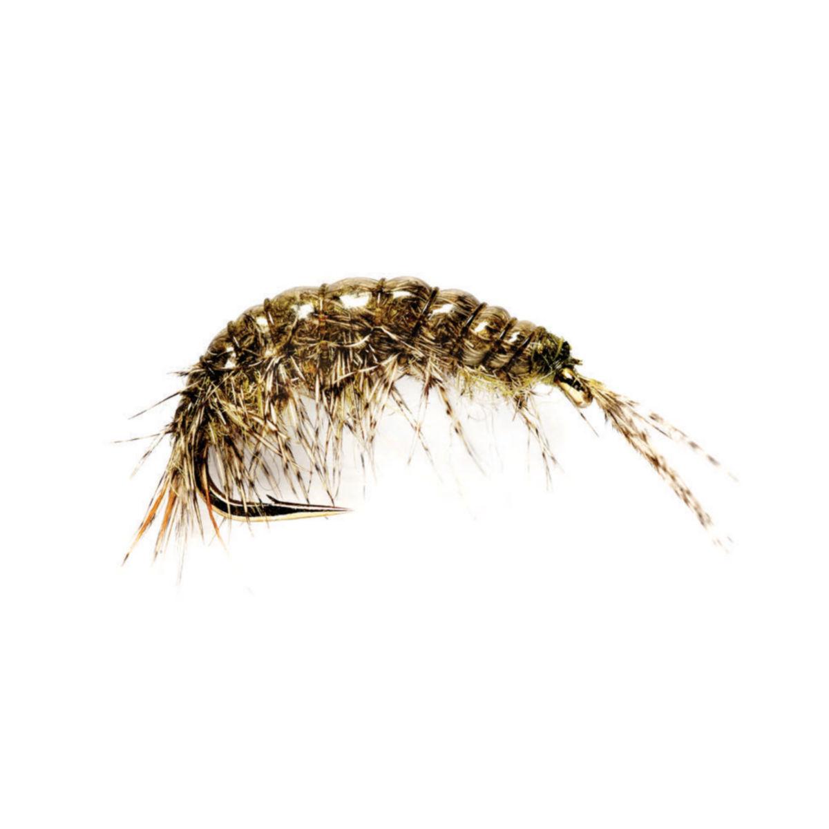 Oliver Edward's Freshwater Shrimp - image number 0