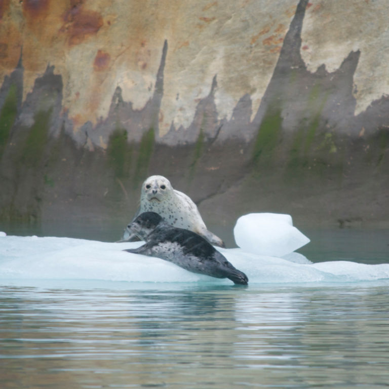 Alaska Adventure Cruise with The Boat Company -  image number 4