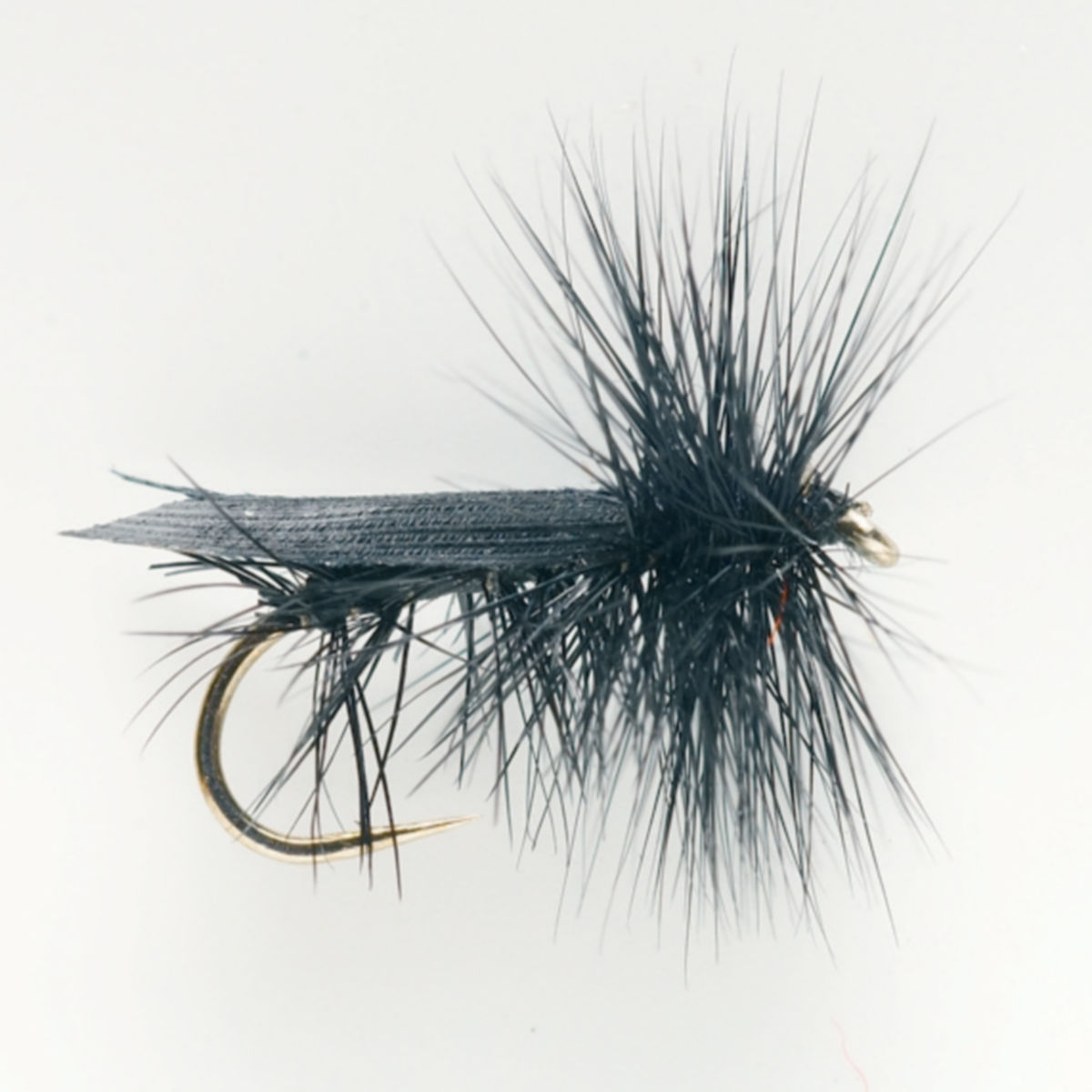 Tent Wing Black Caddis - image number 0