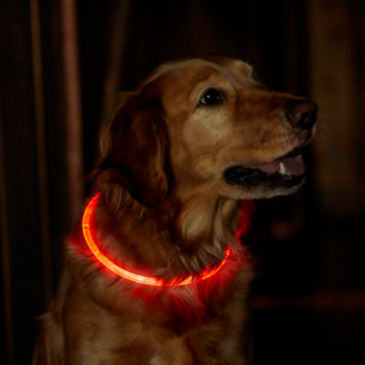 LED Rechargeable Safety Collar -