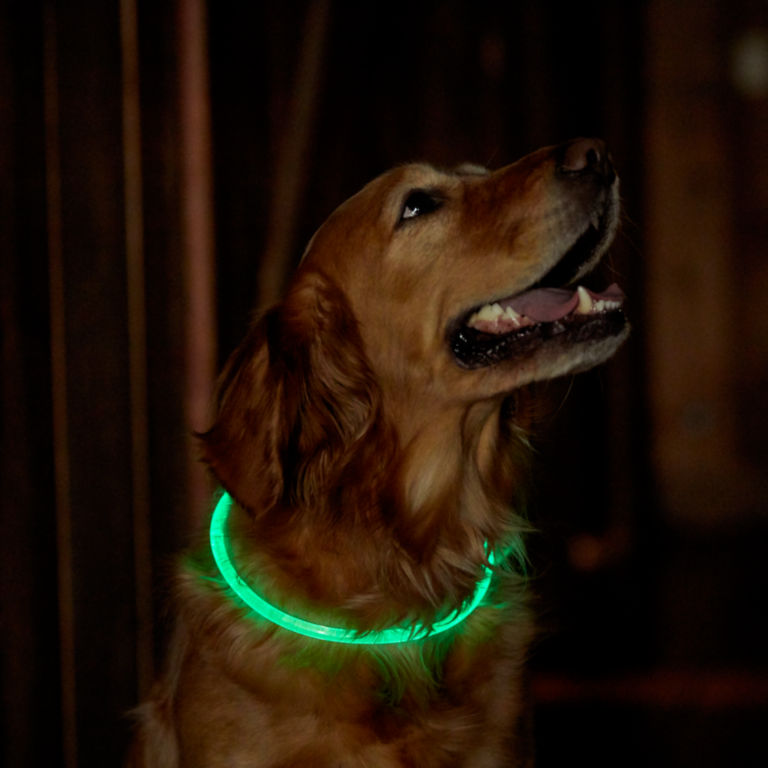 LED Rechargeable Safety Collar -  image number 2