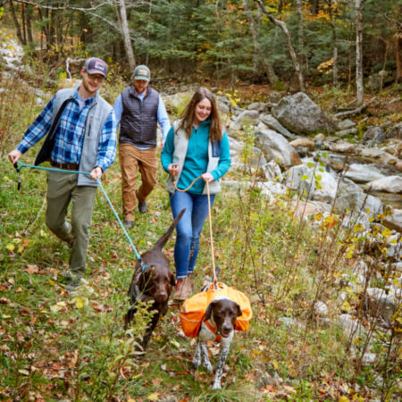 Group of people walking in the woods with their dogs