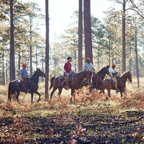 A group of 4 men on horseback in a tree-lined field