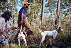 Two men walking with hunting dogs in a field