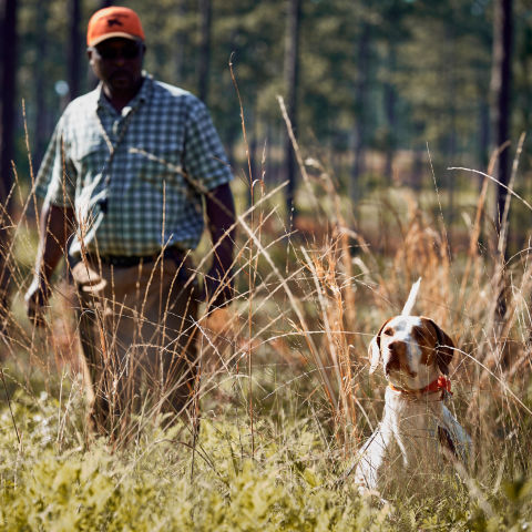 A trainer working a dog in a field