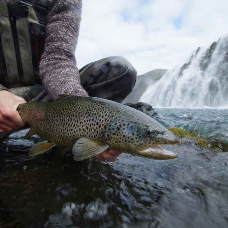 Orvis Week in Iceland with Fish Partner -  image number 5