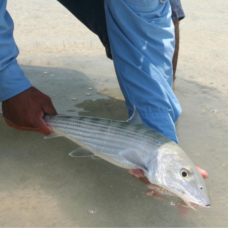 Belize Bonefish Bonanza -  image number 1
