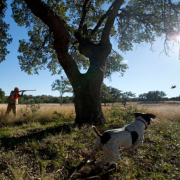 Hunt the Texas Hill Country with Shooting Sportsman Magazine and Orvis at Joshua Creek Ranch -  image number 1