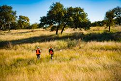 Two hunters walking in a golden field.