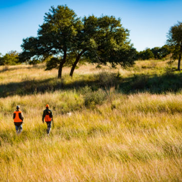 Hunt the Texas Hill Country with Shooting Sportsman Magazine and Orvis at Joshua Creek Ranch -