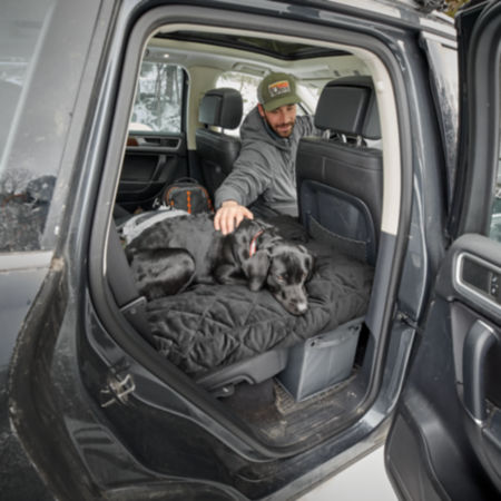 Black lab sitting in the back of a truck looking down