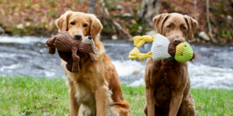 Dogs holding their toys