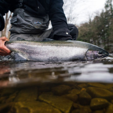 Orvis Steelhead School at Tailwater Lodge Altmar, NY -