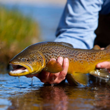Complete Trout School at Falcon's Ledge, Utah -  image number 1