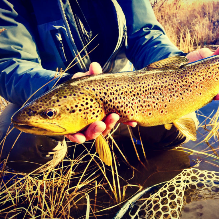 Complete Trout School at Falcon's Ledge, Utah -  image number 3