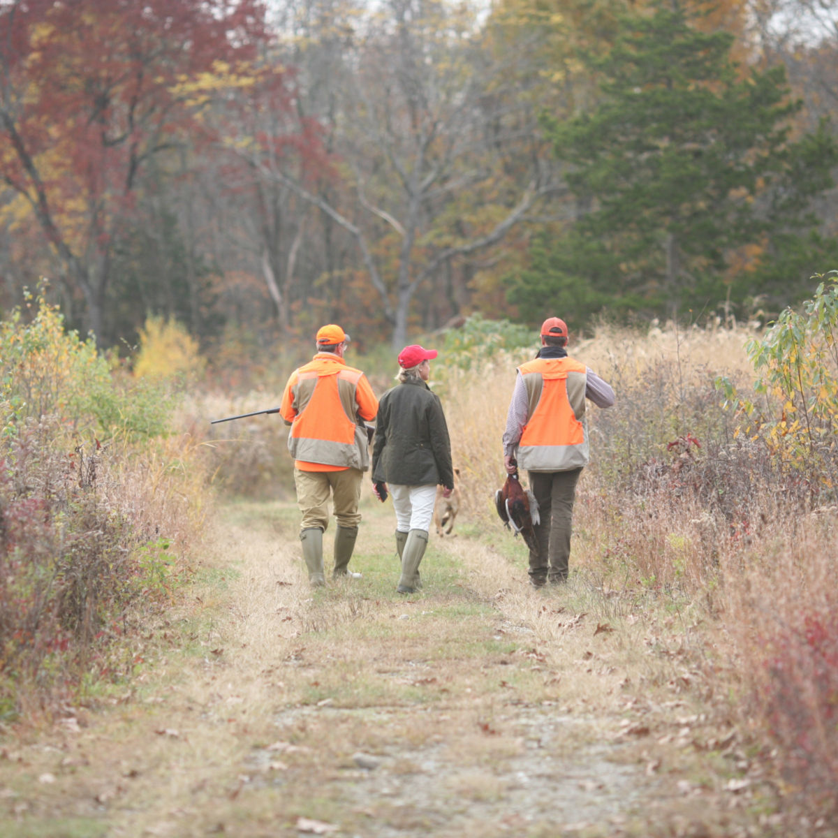 Complete Upland Hunting School at Orvis Sandanona, New York / 1-Day School - image number 0
