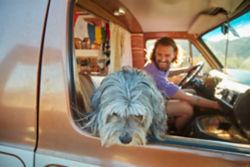 dog sitting in front seat of van