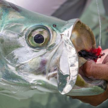 Belize Grand Slam Fly-Fishing School -  image number 2