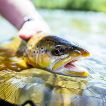 Orvis Week at Healing Waters Lodge -  image number 2