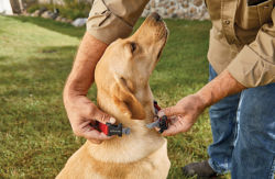 Man putting tick collar on his dog