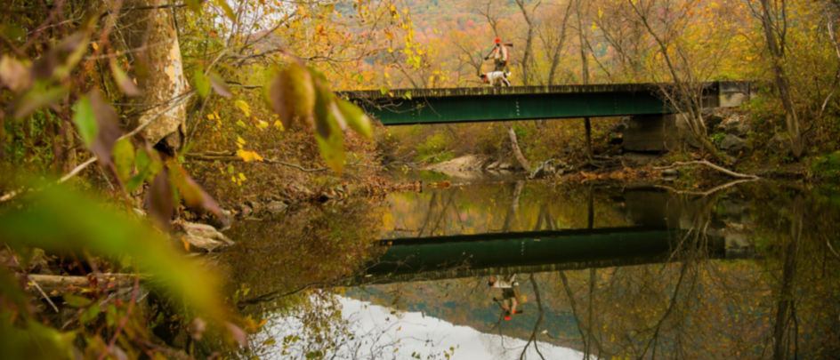 Hunter and dog walking over a bridge in the woods