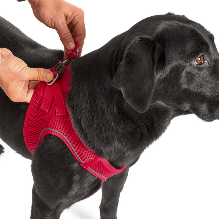 Easy Step-in Harness -  image number 4