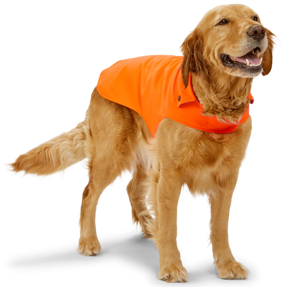 Softshell Dog Jacket - image number 0