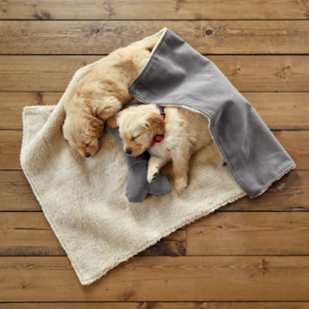 Two puppies asleep on the floor covered by a blanket