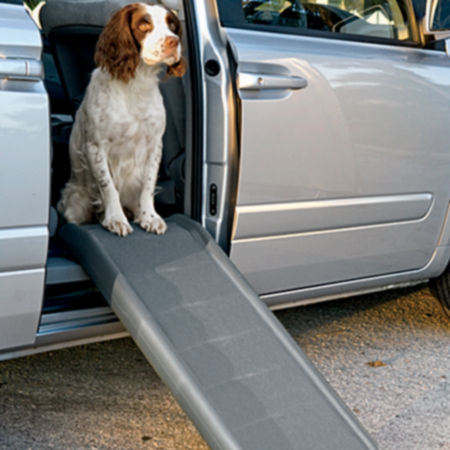 Dog in car sitting in front of a dog ramp