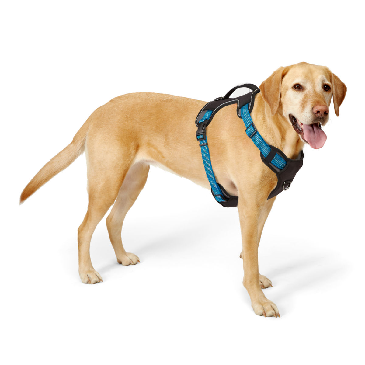 Tough Trail™ Dog Harness - image number 0