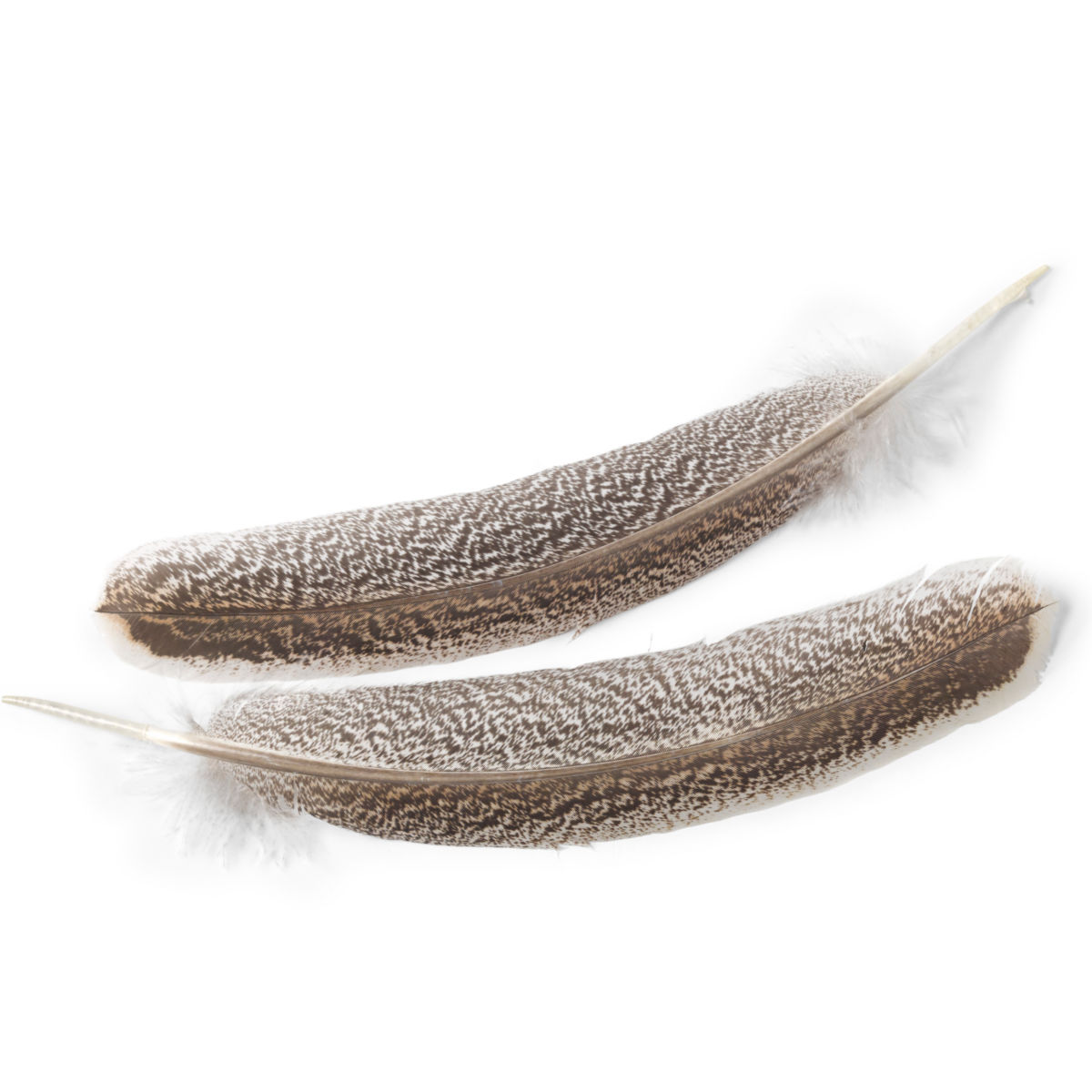 Premium Turkey Wing Feathers - image number 0