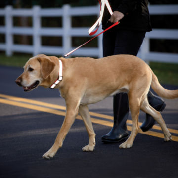Personalized Reflective Collar -  image number 1