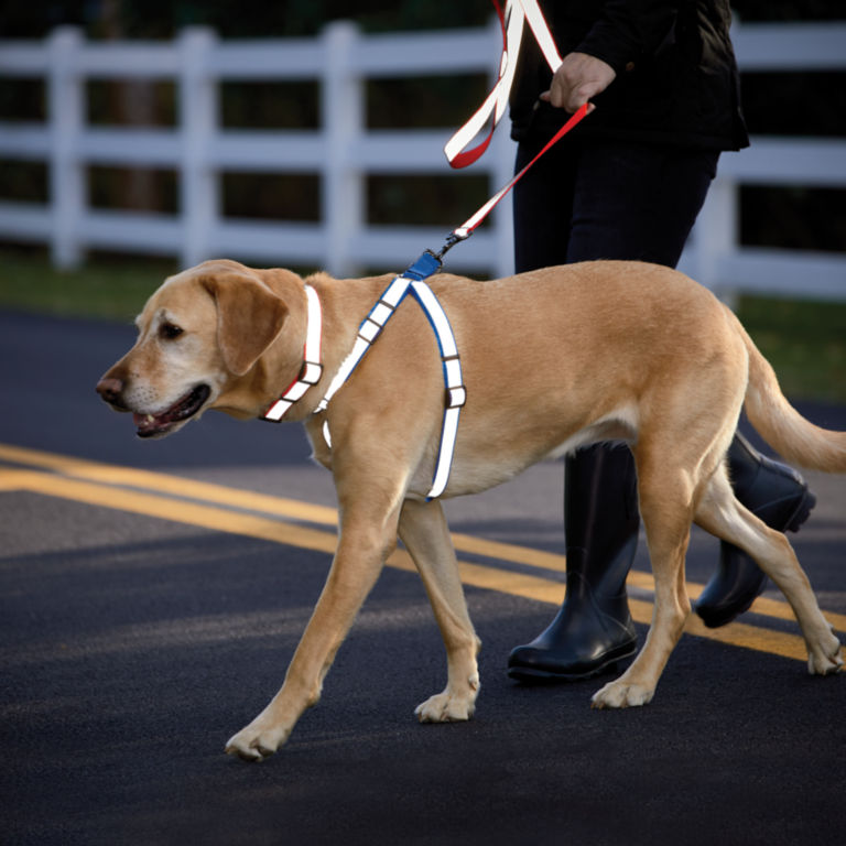 Personalized Reflective Harness -  image number 1