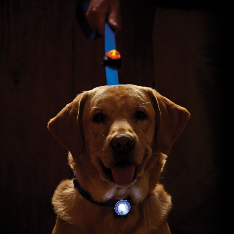 LED Safety Collar Light -  image number 1