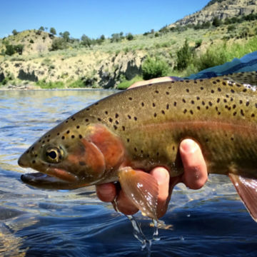 Trout Unlimited Women's Trip at Hubbard's Yellowstone Lodge -  image number 1