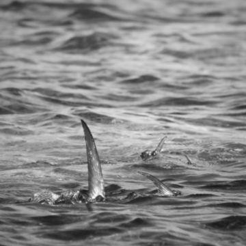 Blue Horizon Fly Fishing -  image number 4