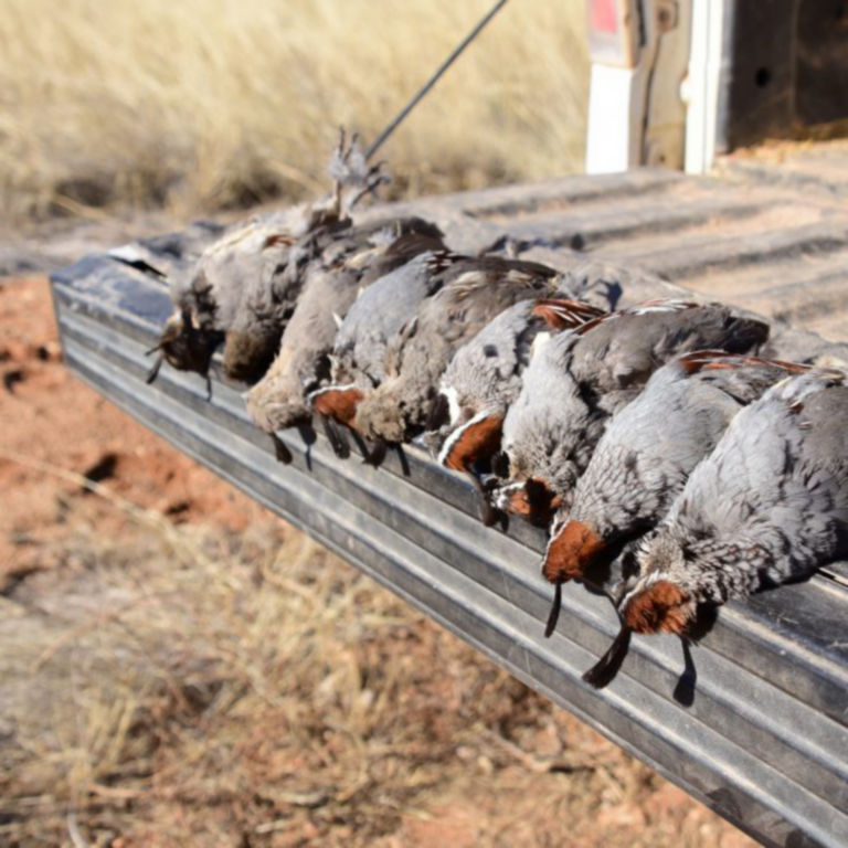 Dave Brown Outfitters - Arizona Quail Guides -  image number 1