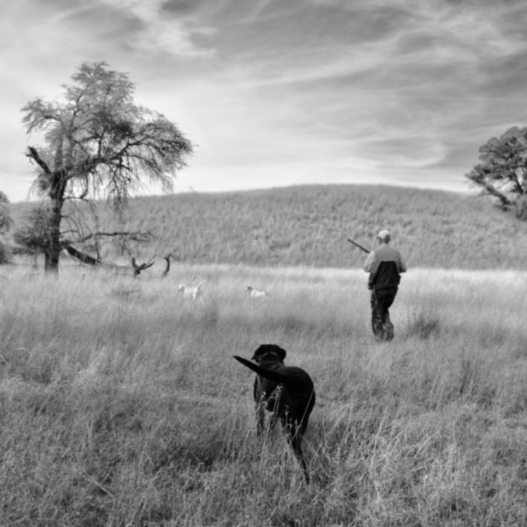 Dave Brown Outfitters - Arizona Quail Guides -  image number 3