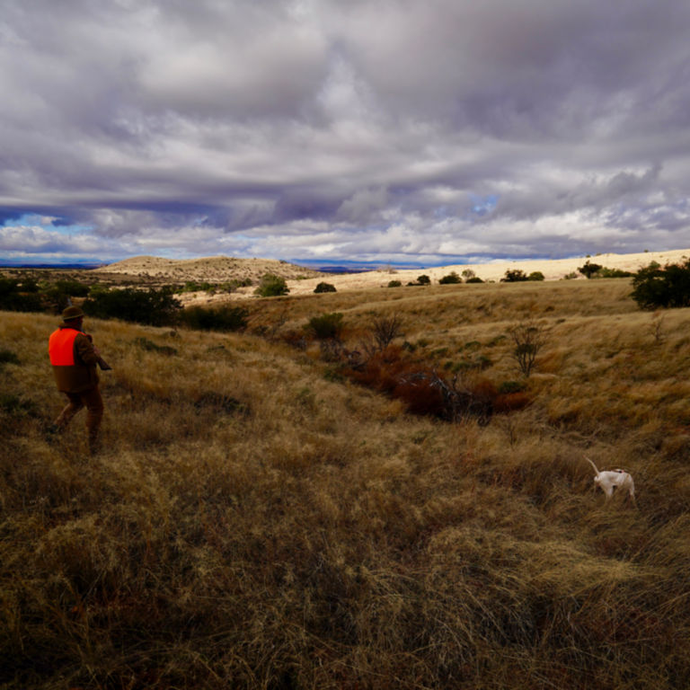Dave Brown Outfitters - Arizona Quail Guides -  image number 4