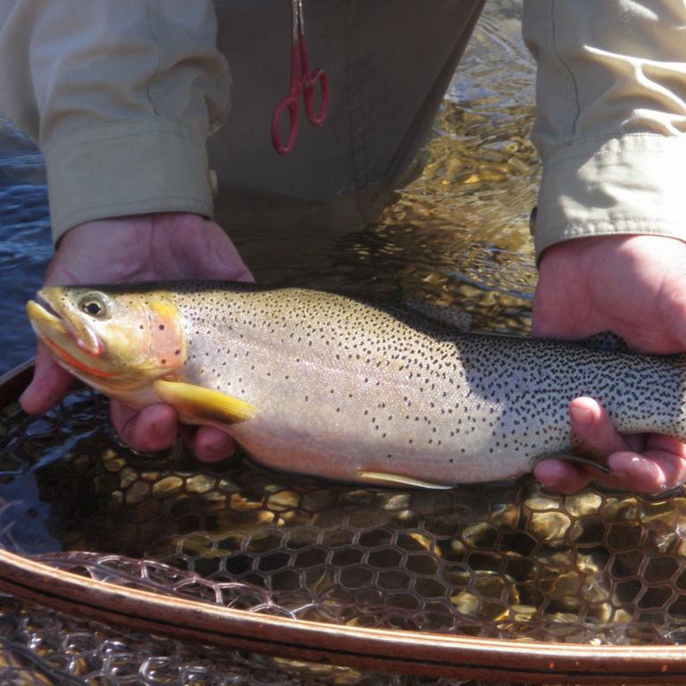 Ultimate West Flyfishing, BC -  image number 3
