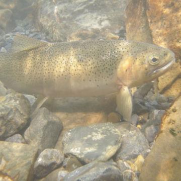 Ultimate West Flyfishing, BC -  image number 1