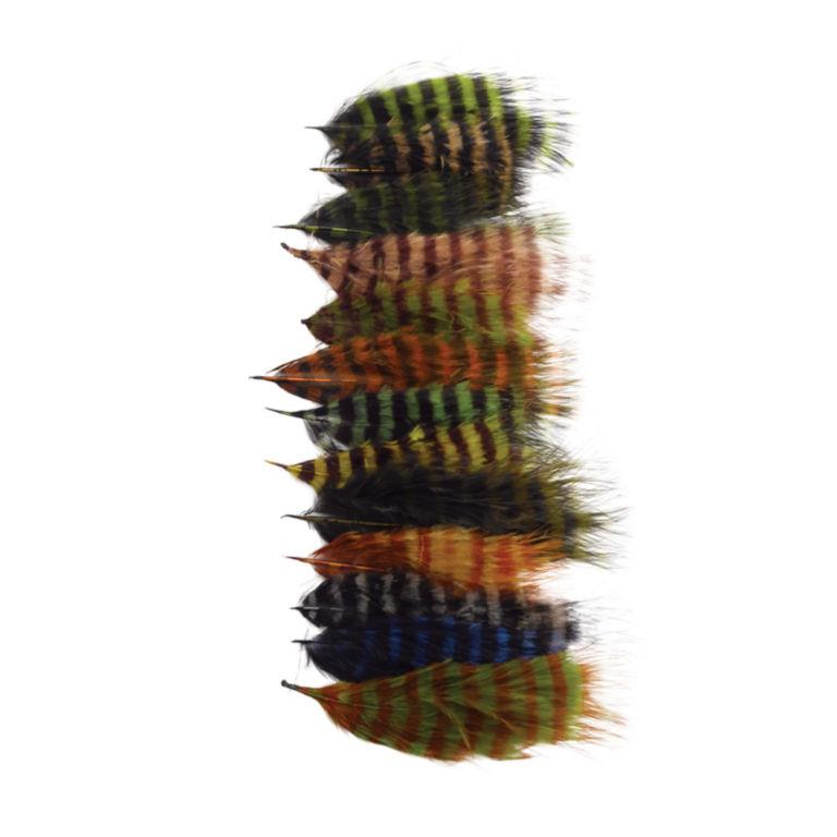 Barred Marabou -  image number 0