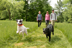 dogs running ahead of its family in a field
