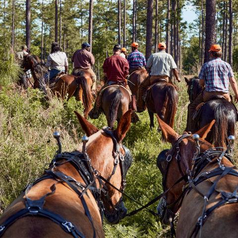 A group of men on horseback walking a woodland path