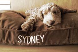 Cute Dog sleeps in Brown Bed