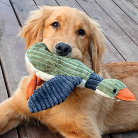 Golden holding an Animal Squeaky Toy in it's mouth