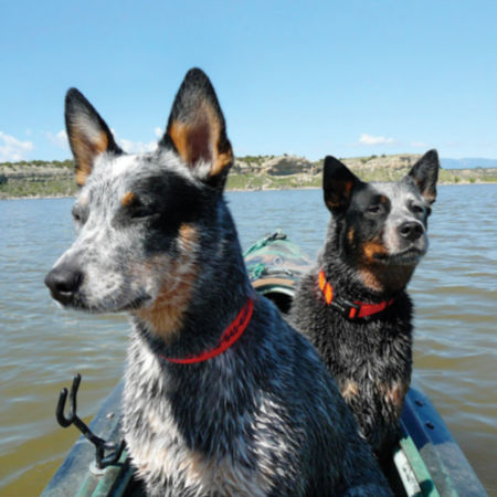 Two dogs sitting in a boat on the water wearing Orvis collars